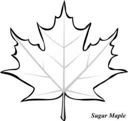 25 maple leaf images ideas autumn leaf color maple leaf tree maple