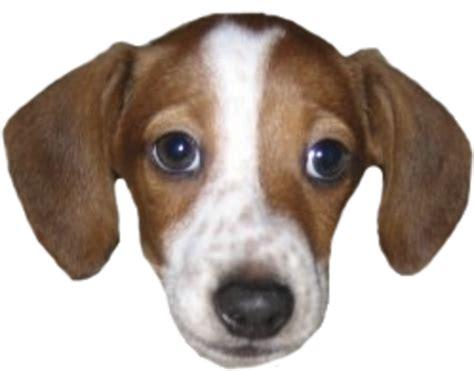 puppy twitching 2048 twitch emotes