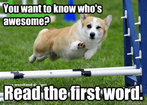 how do you spell puppy you want to who s awesome read the word compliment quickmeme