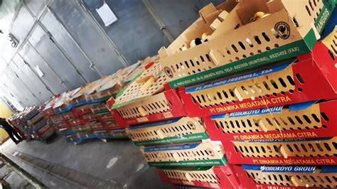 Bibit Ayam Potong Palembang penjualan doc ayam kung untuk daerah palembang
