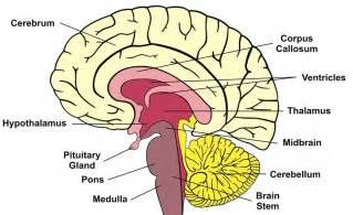 term memory loss definition causes tests