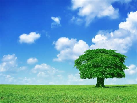 wallpaper green tree hd green tree hd wallpapers 500wp