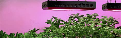 light emitting diodes plant growth how to grow peppers indoor led grow lights lxp