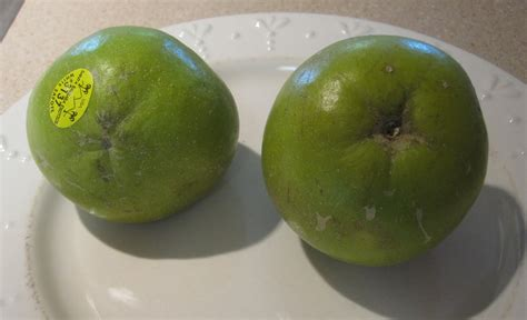 fruit sapote cannundrums white sapote
