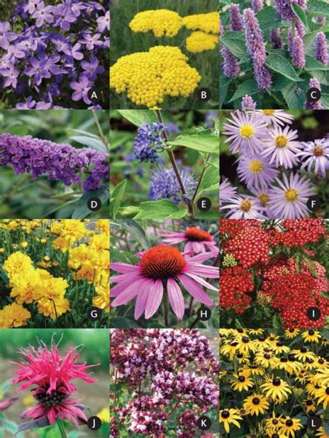 Flowers For A Butterfly Garden Flowers For Butterfly Garden Butterfly Gardens Get Plants For Less Butterfly Gardens Get