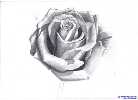 how to tattoo a realistic rose how to draw a in pencil draw a realistic step