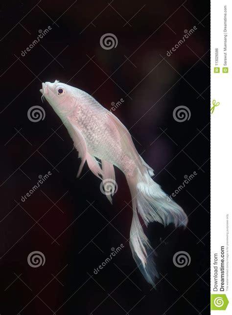 Exclusive Gartenhäuser 701 by Freshwater Angelfish Stock Images 701 Photos
