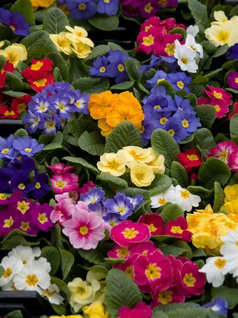 spring flower garden guide extension daily