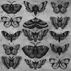 best 25 traditional butterfly tattoo ideas on pinterest
