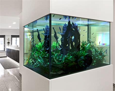 Aquarium Komplettset 60 L 1014 by Aquarium Komplettset 60 L Fische Aquarium 60 L Ribice