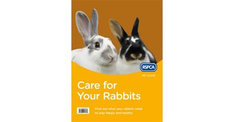 8 Tips On Caring For Pet Rabbits by New Edition Of Care For Your Rabbits Rspca Pet Guide