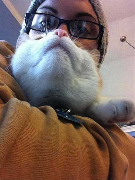 Cat Beard Meme - cat beard meme takes the internet by storm designtaxi com