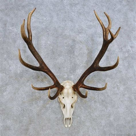 home decor red deer deer antler home decor red deer skull antler european