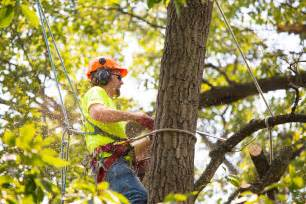 Tree Service In Mike S Tree Service Tree Trimming