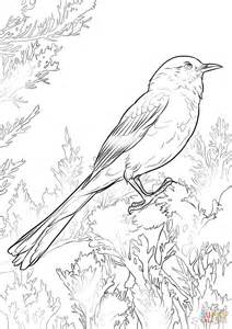 texas mockingbird coloring page coloring coloring pages