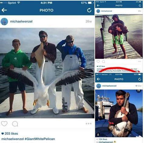 dragging shark behind boat names dog used as shark bait disturbing shark dragging incident