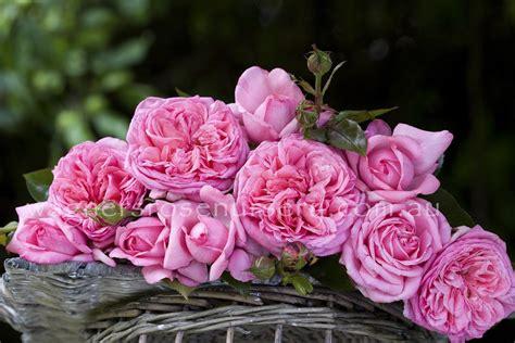 Parfum De Roses parfum de wagner s nursery