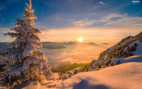 fog sunrise trees mountains winter snowy spruce
