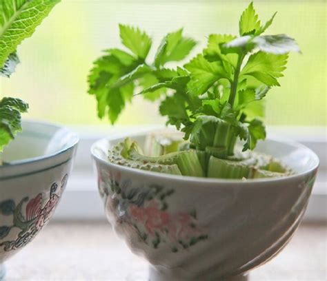 vegetables u can grow indoors 9 best herbs and vegetable you can grow indoors in water