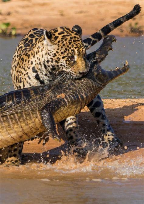 Prey Of The Predator predator and prey quotes quotesgram