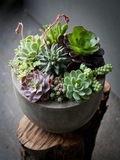 awesome succulents garden ideas home design  interior