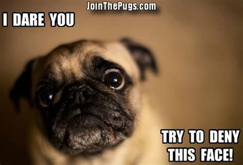 you pug join the pugs gt pug