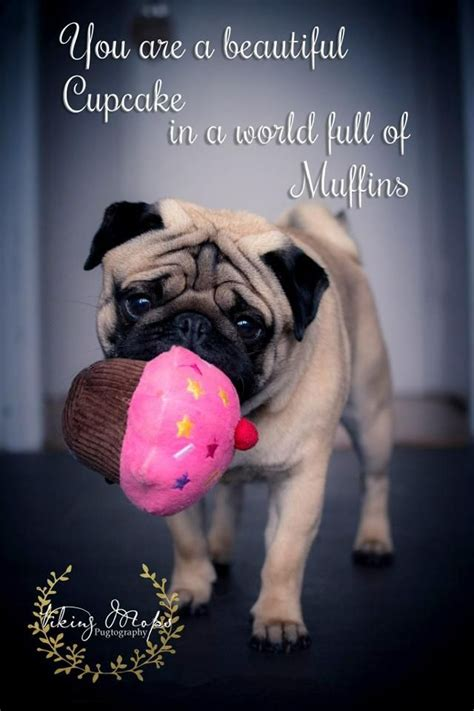 quotes on pugs 17 best pug quotes on pug pug dogs and black pug