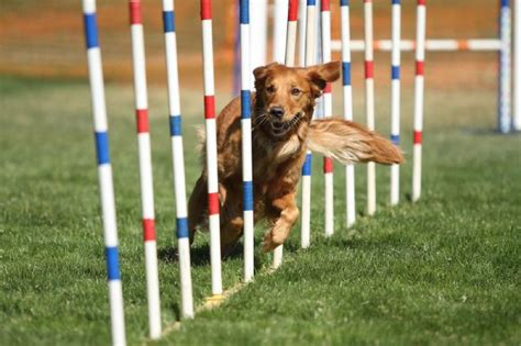 how to your to do agility agility is not a replacement for strategy heinz marketing