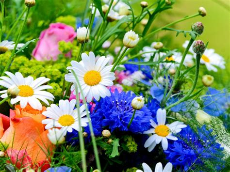 spring flowers spring flowers wallpapers hd pictures one hd wallpaper