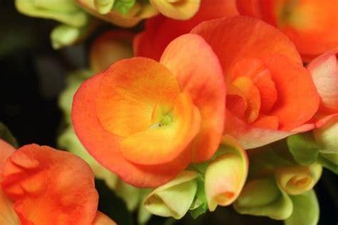 fiori da piantare in aprile fiori e bulbi da piantare ad aprile prepara adesso il tuo