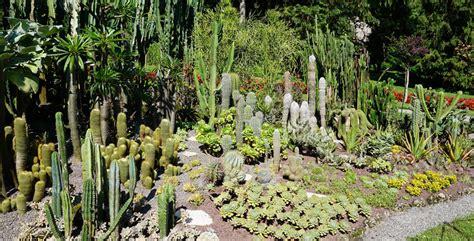 fiori e nomi di persona piante immagini e nomi fiori gialli nomi piante perenni dei