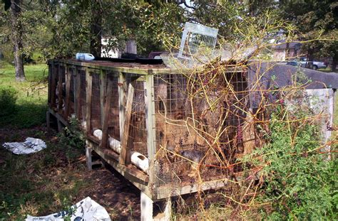are puppy mills file puppy mill02 jpg wikimedia commons