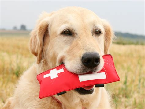 dogs aid aid for dogs and cats next step service dogs