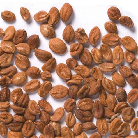 shrub professional seeds vilmorin tree seeds dealer