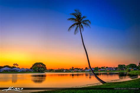 lake katherine tree lighting palm tree lake catherine sunset royal stock photo