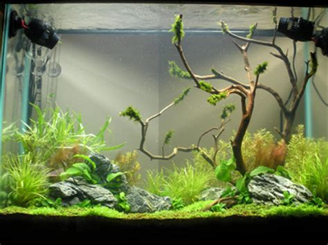 Aquascaping For Beginners by Aquascaping World Magazine A Beginner S Perspective