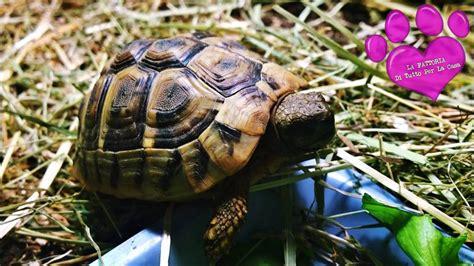 testudo hermanni alimentazione la fattoria di garessio cn tartarughe