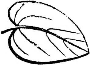 Outline Drawing Of A Leaf by Leaf Outline Clip Cliparts Co