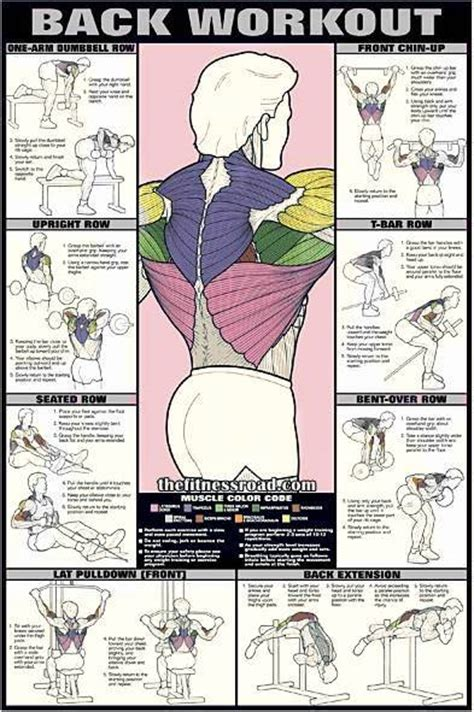 best back workout chart for and ultimate back