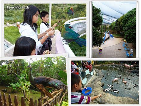 Tempat Makan Burung Acrylic batu secret zoo spots liburan anak
