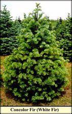 tree varieties comparison compare varieties illinois tree association