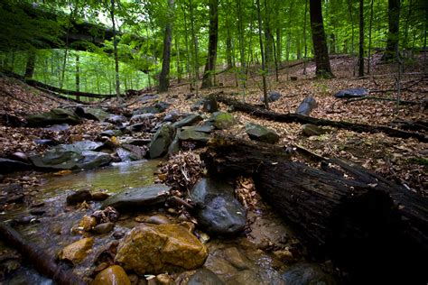 creek park inventory monitoring at rock creek park