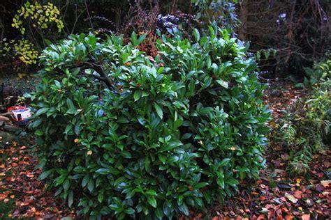 Garten Busch ein busch im garten in kohlscheid bank am abend vom 20 11 2013 landschaftsfotos eu