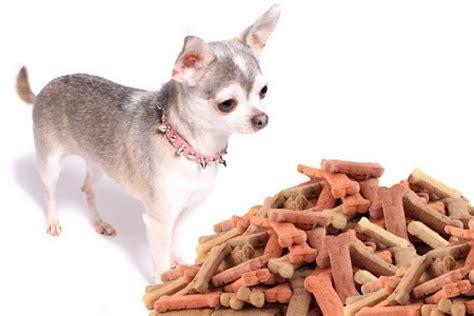alimentazione cani piccola taglia socialdogcat l alimentazione corretta per i cani di