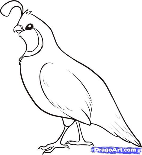 coloring page quail q is for quail coloring page coloring pages pinterest