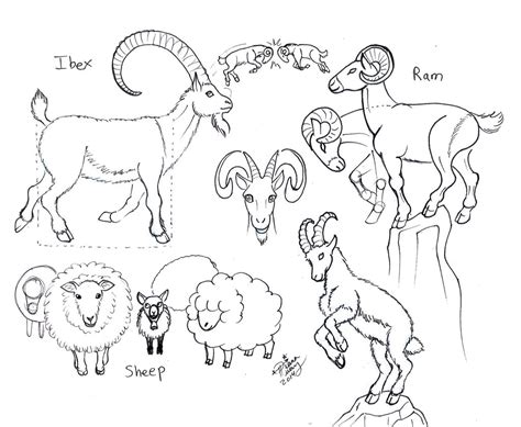 how to draw new year goat draw ram ibex sheep goat by diana huang on deviantart
