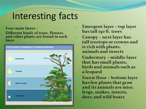 10 interesting facts about the floor facts about the forest floor layer of the rainforest
