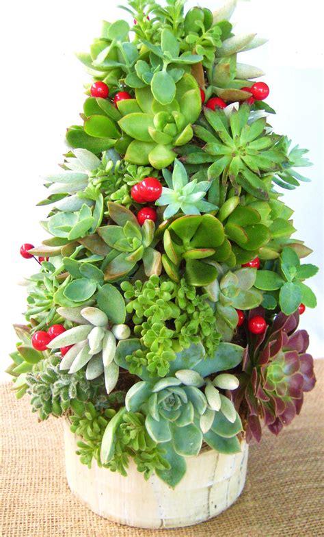 diy succulent topiary tree tabletop garden by