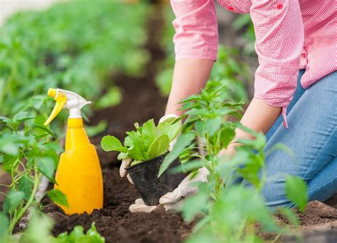 Garden Pesticides by Gardening Basics 11 Age Tips To Ignore Completely