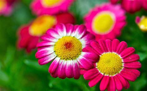 imagenes de flores mas bonitas flores hermosas del mundo hd imagui